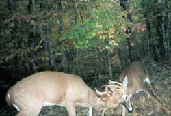 Come hunt whitetails.