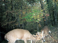 Come hunt Illinois premier outfitter.